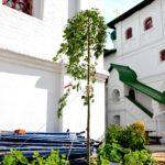 Озеленение храмовой территории